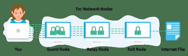 Fille récupérant un fichier Internet via Tor Nodes